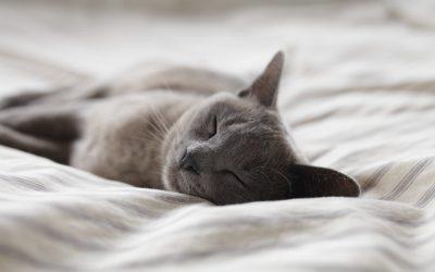3. Get Enough Sleep